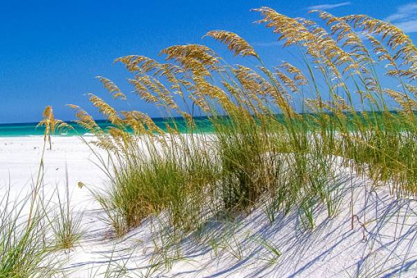 Fort Pickens Aquatic Preserve beach grass