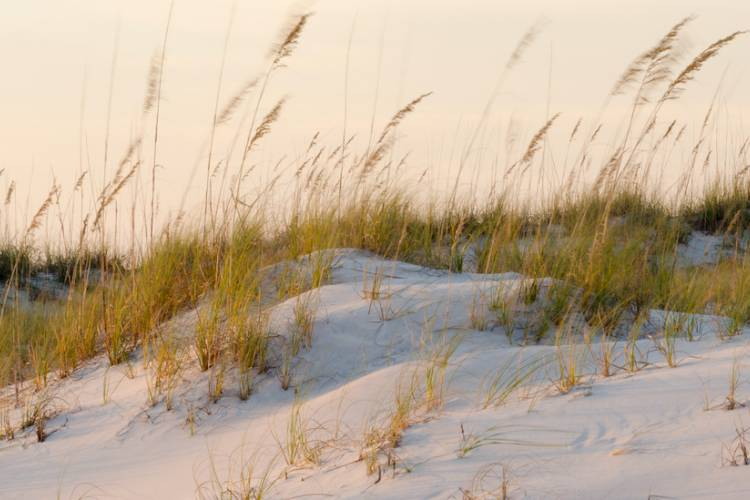 sand dunes with grasses blowing in the wind and sunset in the background with pink hues
